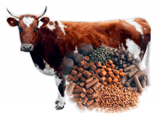 How to Start A Cattle Feed Plant?